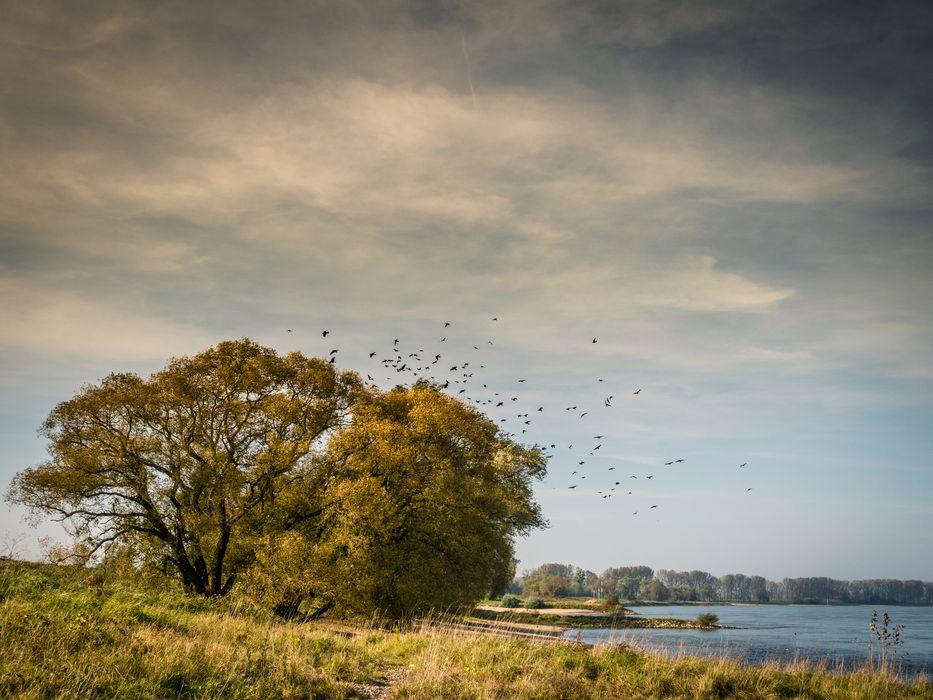 Oktober am Rhein
